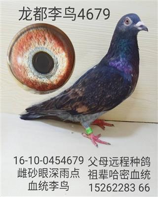 龙都李鸟4679
