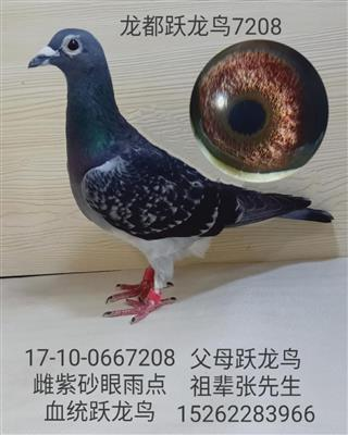 龙都跃龙鸟7208