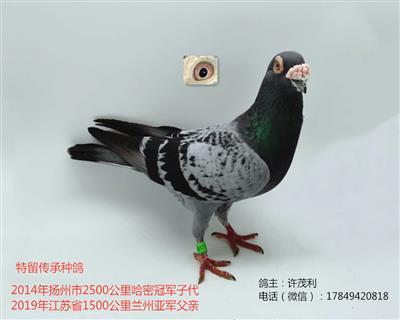 国血超远程吴淞哈密冠军子代兰州亚军父亲