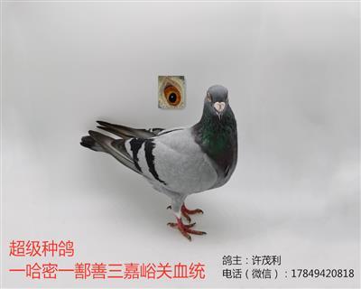 国血超远程吴淞哈密亚军鄯善36名三嘉峪关