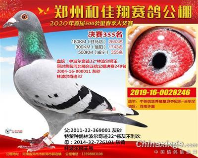 2020 郑州和佳翔公棚355名