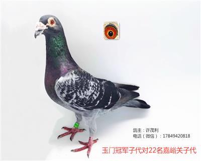 国血超远程吴淞玉门冠军子代对嘉峪关子代