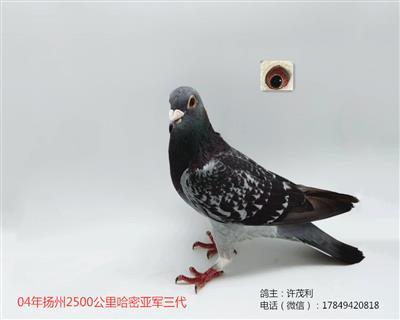国血超远程吴淞04年2500哈密亚军三代
