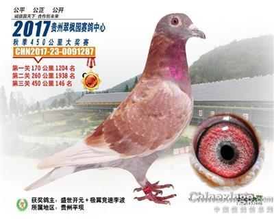 贵州翠枫园赛鸽中心决赛146名