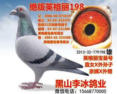 201332779198副本_副本