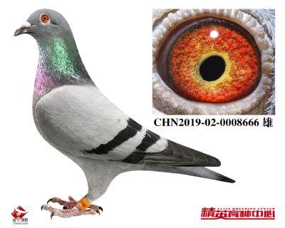 CHN2019-02-0008666