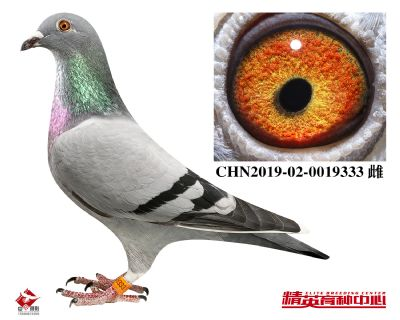 CHN2019-02-0019333
