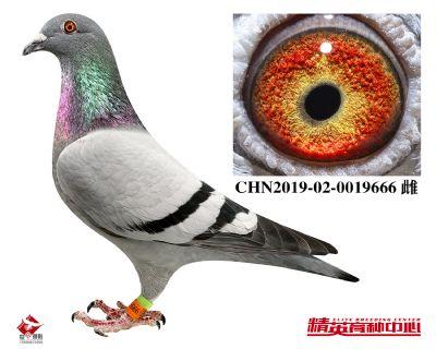 CHN2019-02-0019666