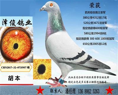 胡本5957