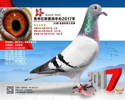 贵州红枫赛鸽大棚6名