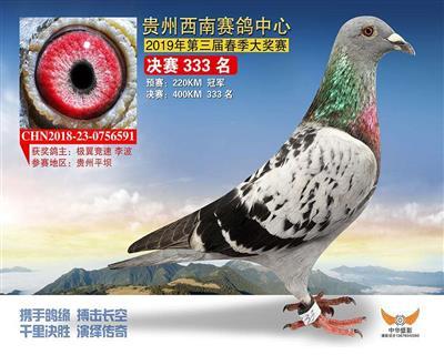贵州西南赛鸽中心预赛冠军