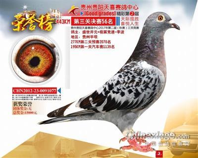 贵州天喜赛鸽中心决赛56名