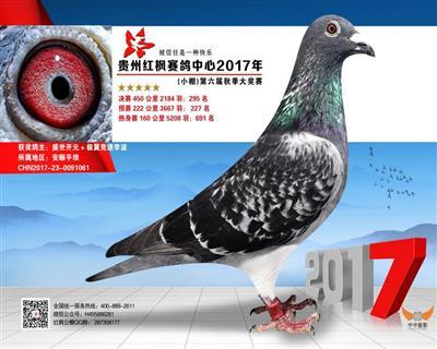 贵州红枫赛鸽中心小棚决赛295名
