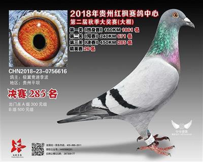 贵州红枫赛鸽中心决赛285名