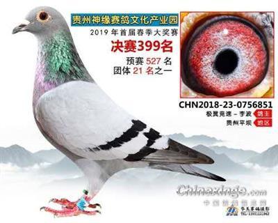 贵州神缘赛鸽中心决赛399名