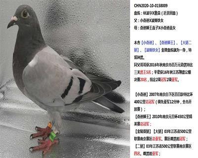 20年幼鸽【林波尔x甘纳斯】近亲回血
