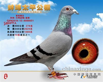 2020春安徽太平公棚决赛278名