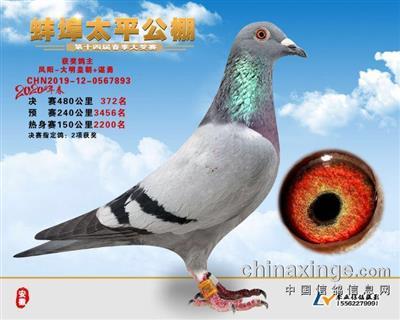 2020春安徽太平公棚决赛372名