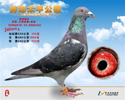 2020春安徽太平公棚加站赛124名