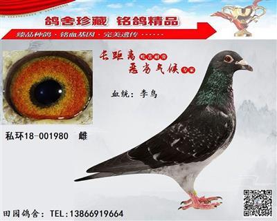 李鸟980