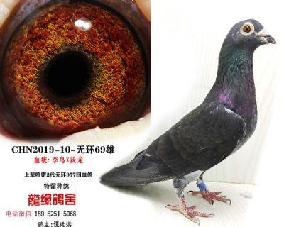 李鸟跃龙2