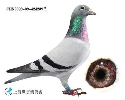 荟萃239