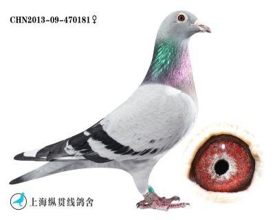 风云王牌直女181