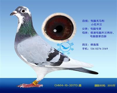 电脑戈马利种鸽-713