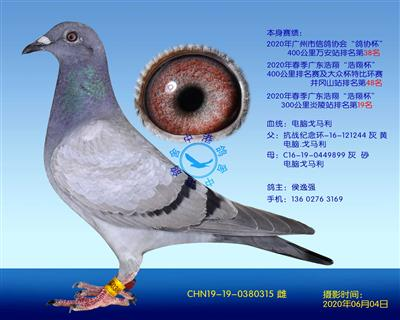 电脑戈马利种鸽-315