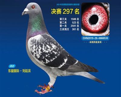 """""""2020慧能春棚决赛297名"""""""