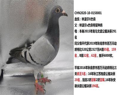 20年幼鸽【林波尔】X【詹森】