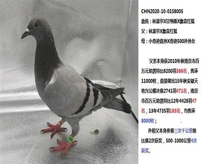 20年幼鸽【林波尔x甘纳斯x红狐】
