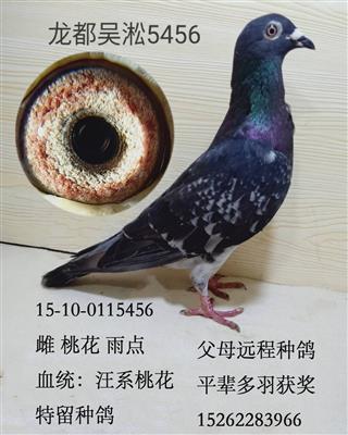 龙都吴淞5456