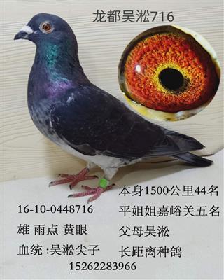 龙都吴淞716
