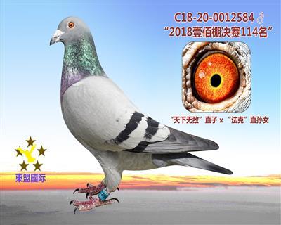 """""""2018壹佰棚决赛114名"""""""