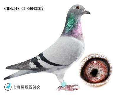 辉挲336