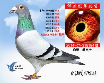 七关综合鸽王殿军