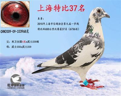 上海市特比37名