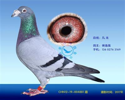 中港凡���N��-881
