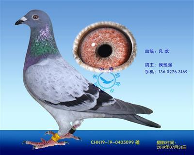 中港凡���N��-099