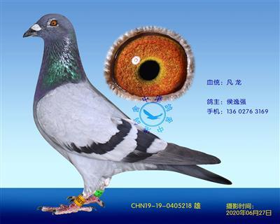 中港凡���N��-218