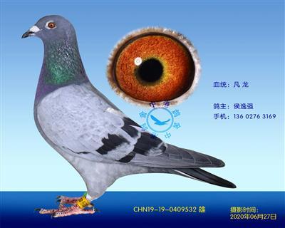 中港凡���N��-532