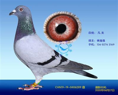 中港凡���N��-289