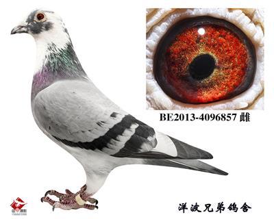 """""""气魄857"""""""