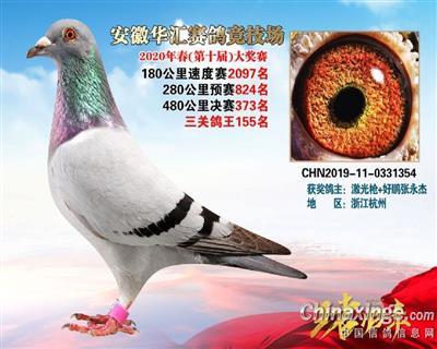 华汇373名、三关鸽王155名(已售)