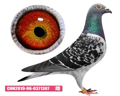 CHN19-06-0371307