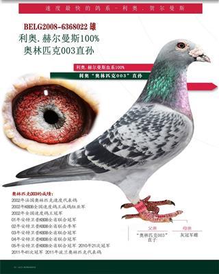利奥003直孙-王牌种雄