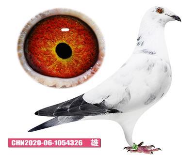 CHN20-06-1054326