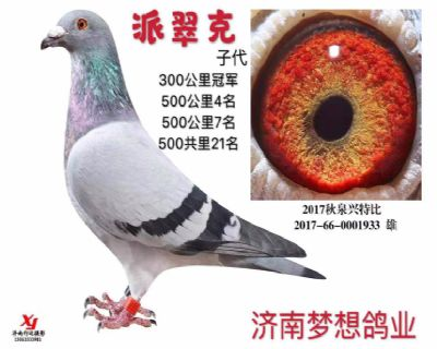 济南梦想鸽业