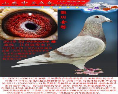 15近血红米砂雄